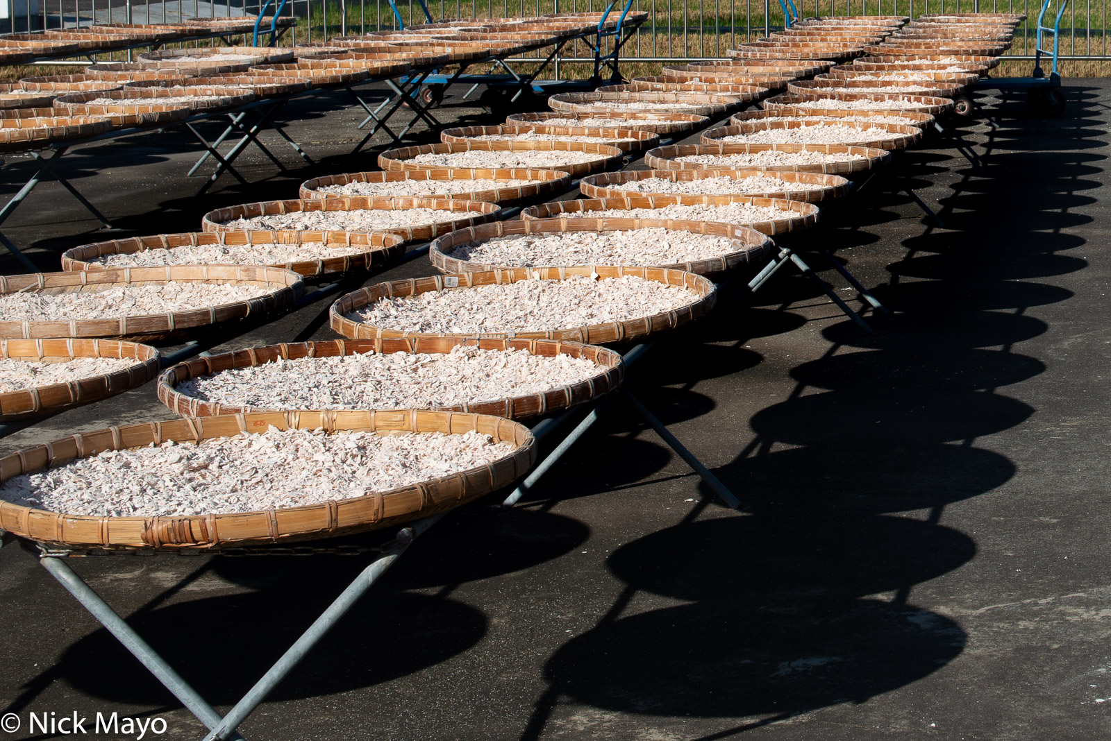 Lotus root drying in trays at Shanzihjiao in Tainan County.