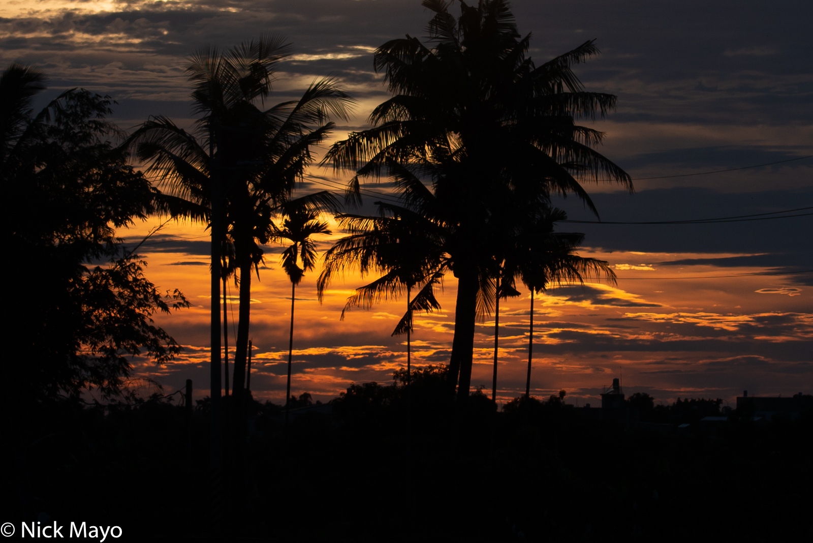 The sunset silhouetting coconut palms on a clear night at Shanzihjiao in Tainan County.