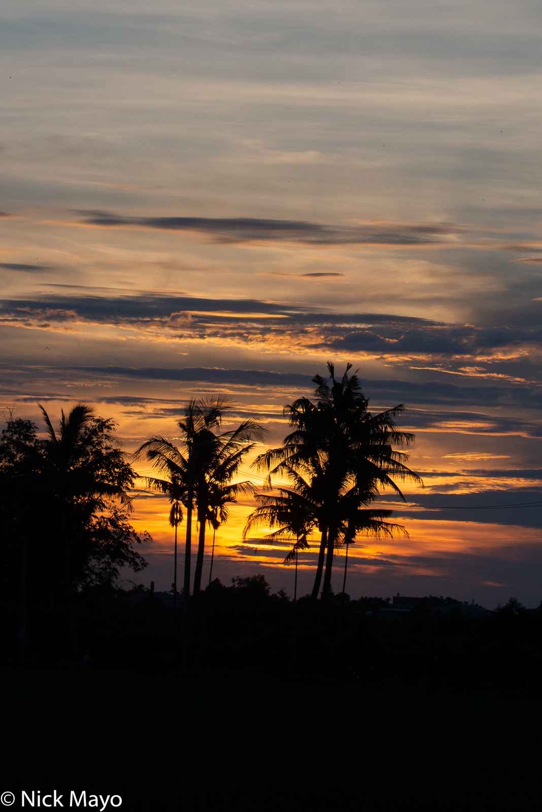 Coconut palms silhouetted by the setting sun at Shanzihjiao in Tainan County.