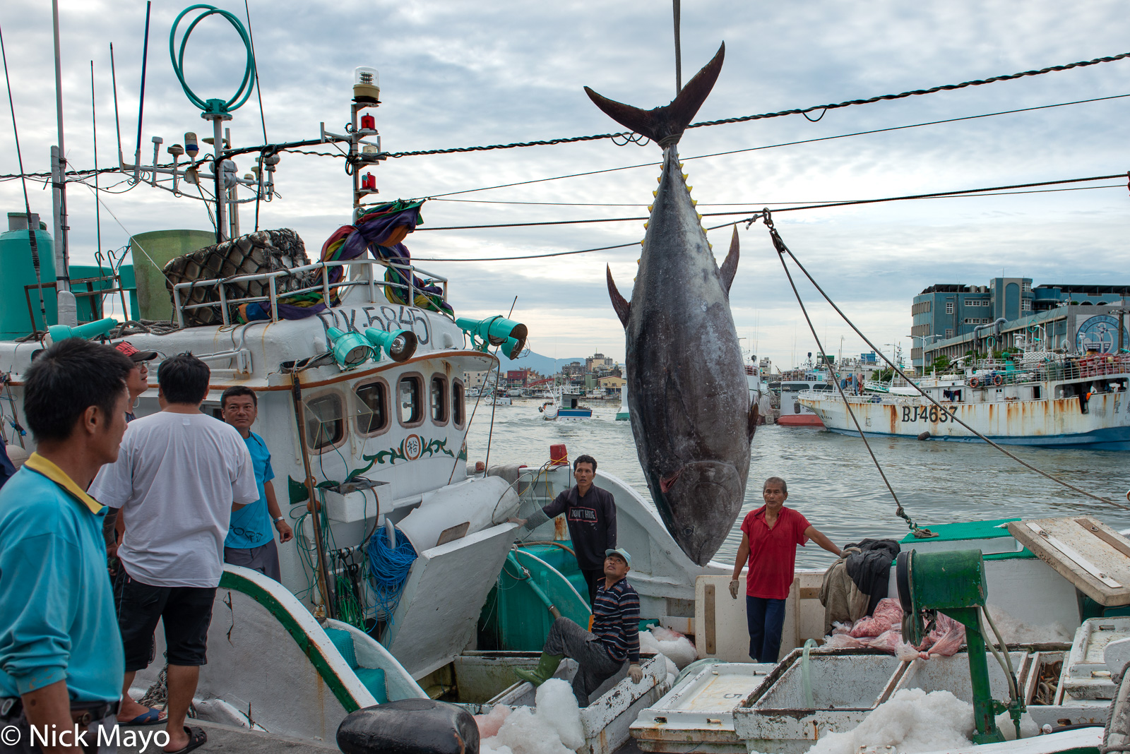 A large yellow fin tuna being unloaded from a fishing boat in Donggang harbour.