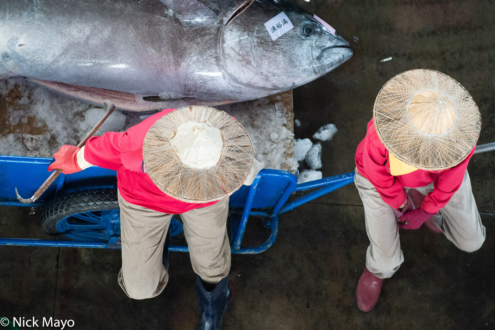 Two women sitting on a cart holding a recently landed tuna at Donggang fishing harbour.