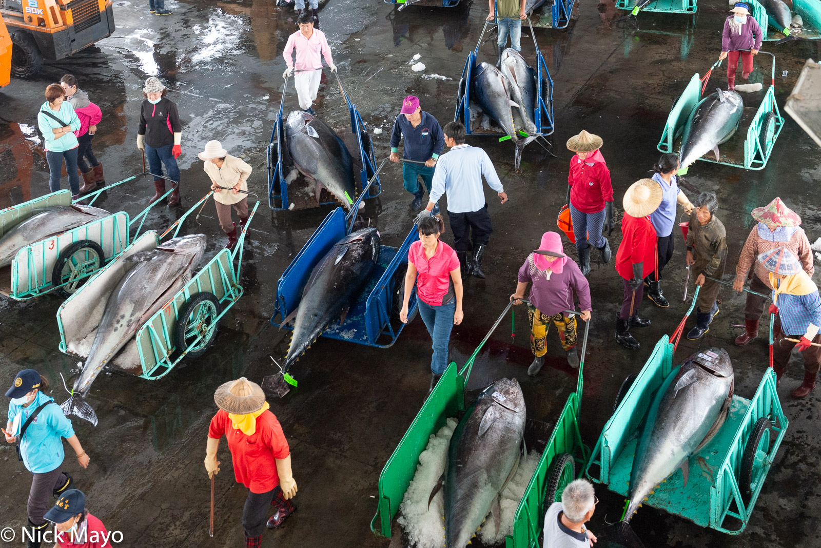 Freshly landed tuna being wheeled on carts to the auction area at Donggang fishing harbour.