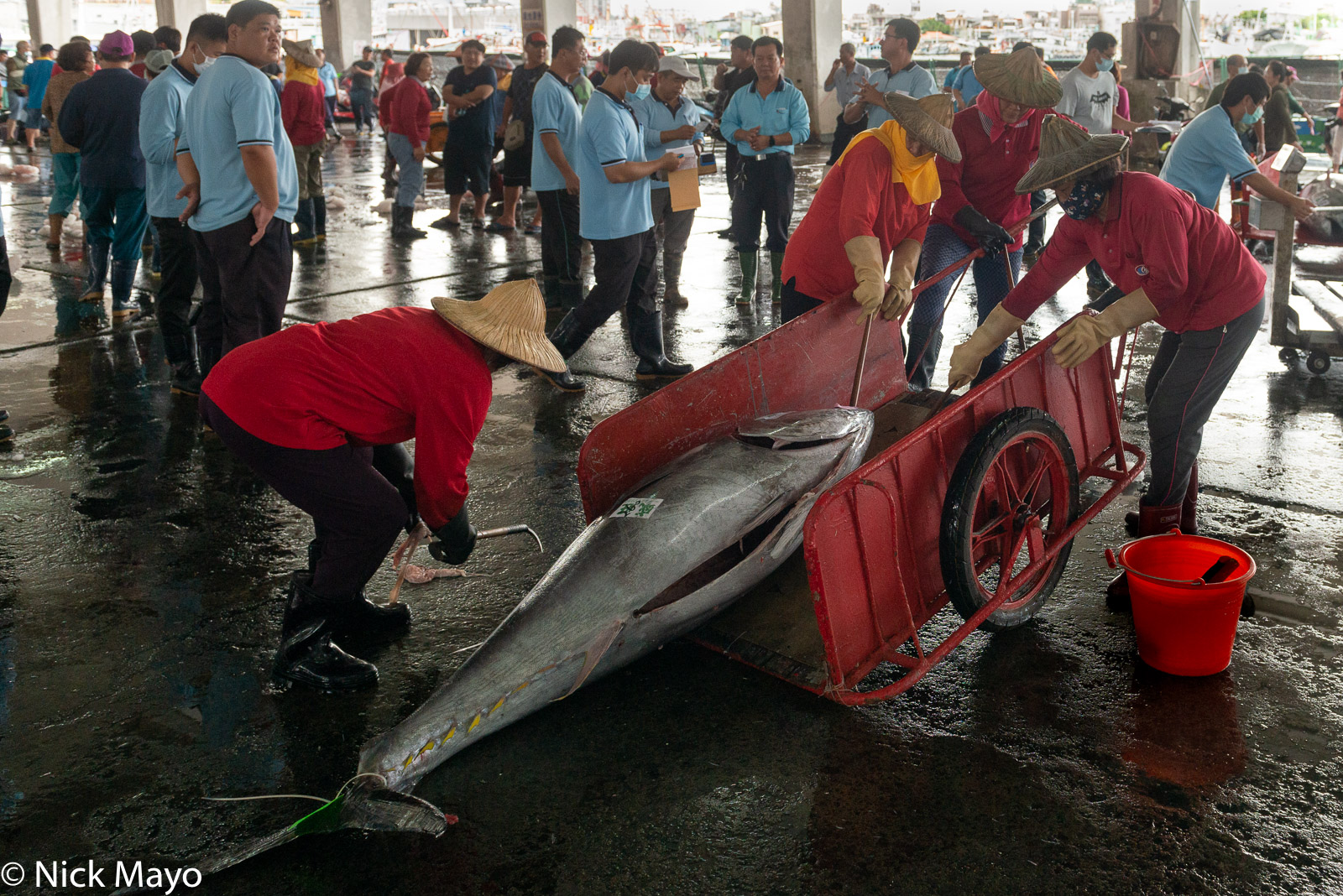 A tuna being dragged onto a cart at Donggang fishing harbour.