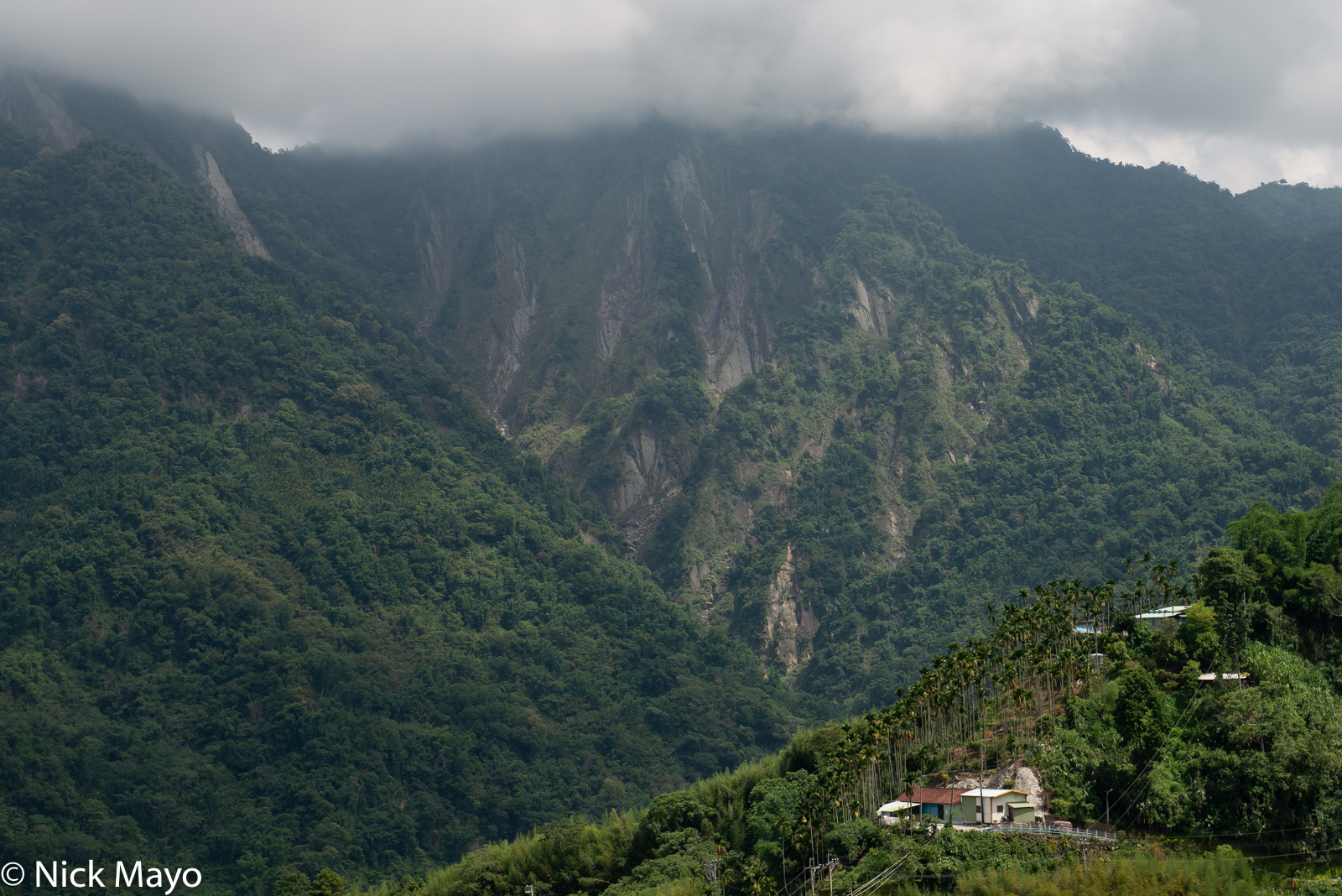 A farmhouse and betel trees on a mountainside in the Dahu district of Chiayi County.