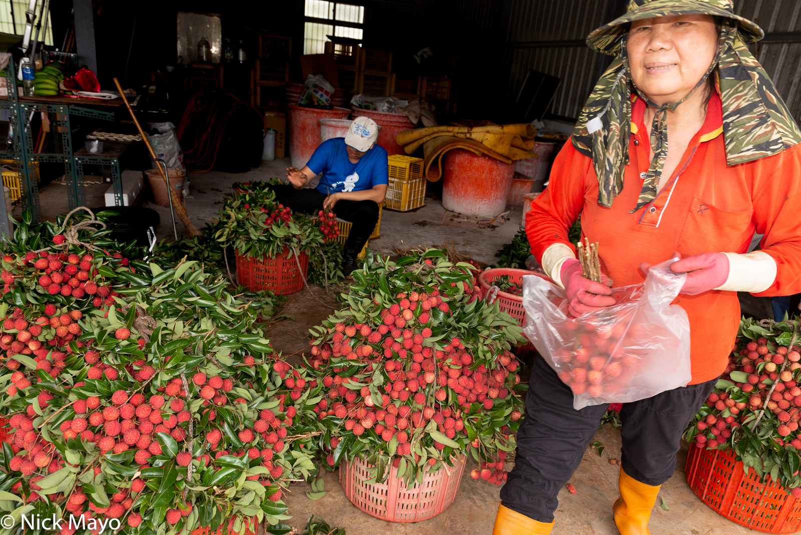 Lychee farmers processing their recently harvested crop at Fanlu in Chaiyi County.