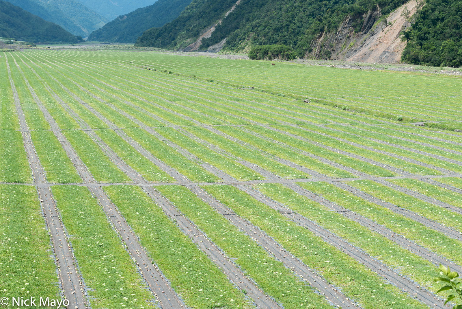 Water melon fields at Nan Shan in the Lanyang valley.
