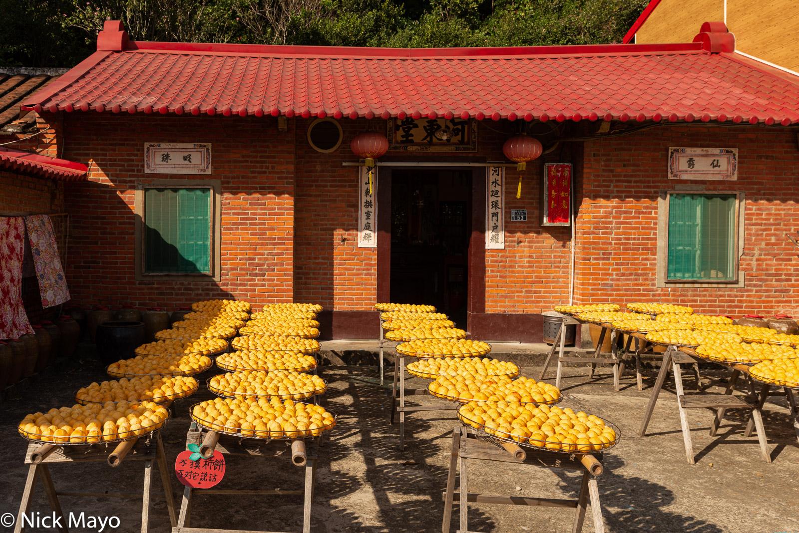 Persimmons drying in a farmhouse courtyard near Xinpu in Hsinchu County.