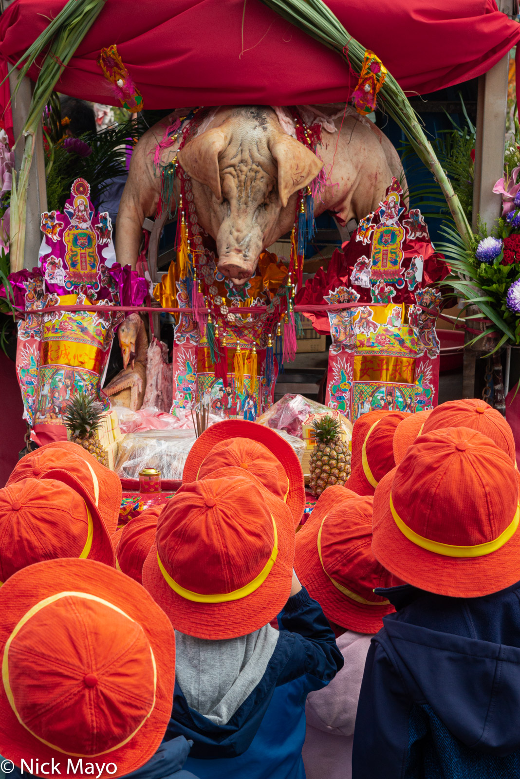 School children admiring a shen zhu (holy pig) displayed at a temple festival in Linkou.