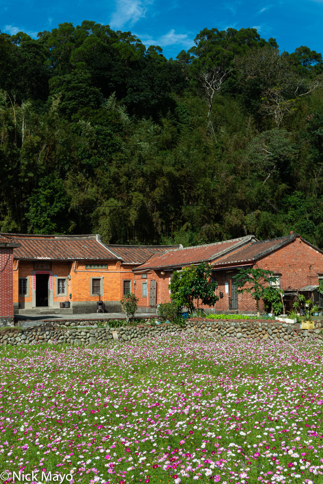 A three sided red brick farmhouse behind a field of flowers at Shanbi.
